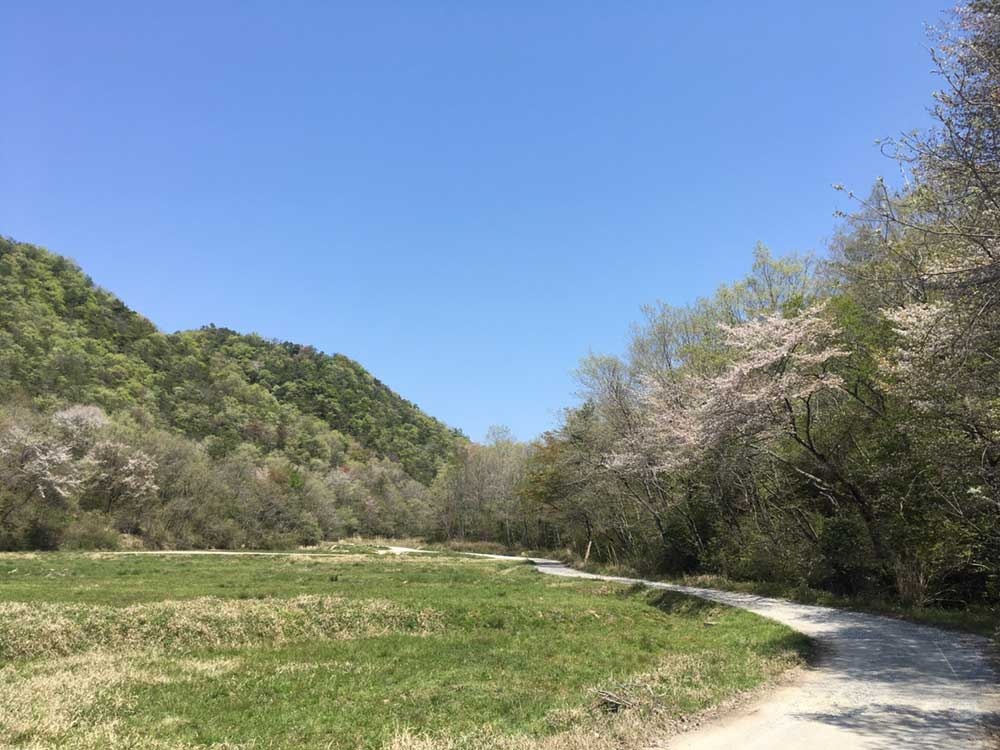 遅咲きの桜を楽しみながらライド!